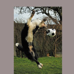 Oz leaping-football-WIDE