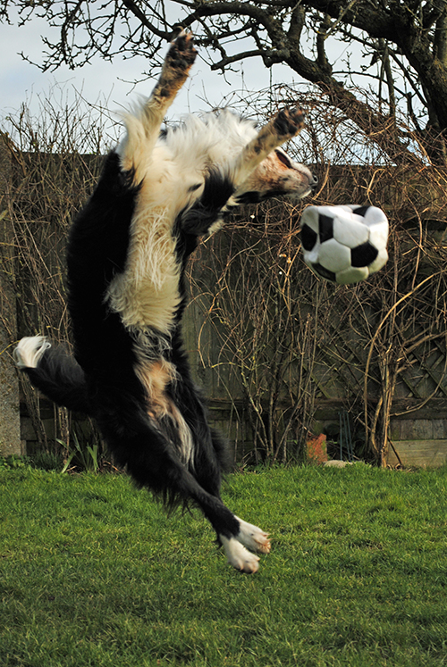 Oz leaping-football